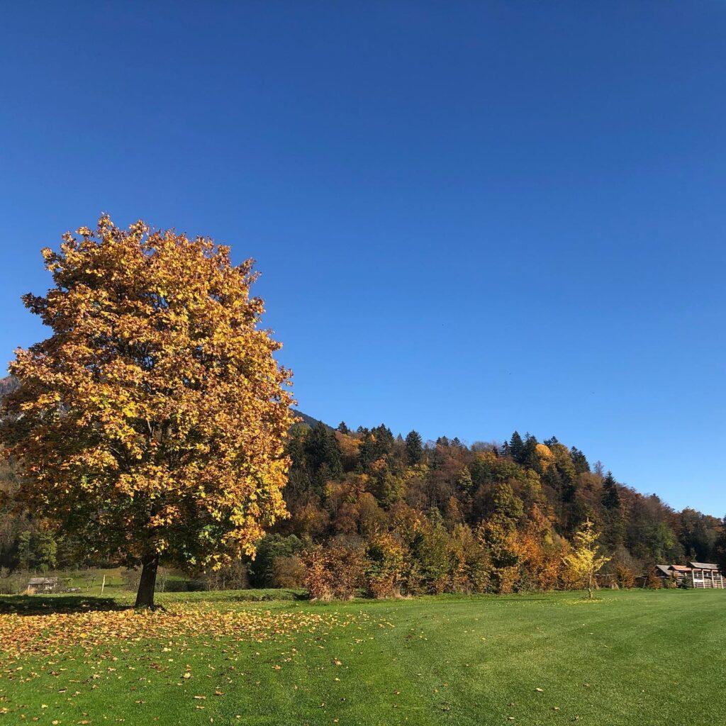 Jeseni redno grabimo odpadlo listje