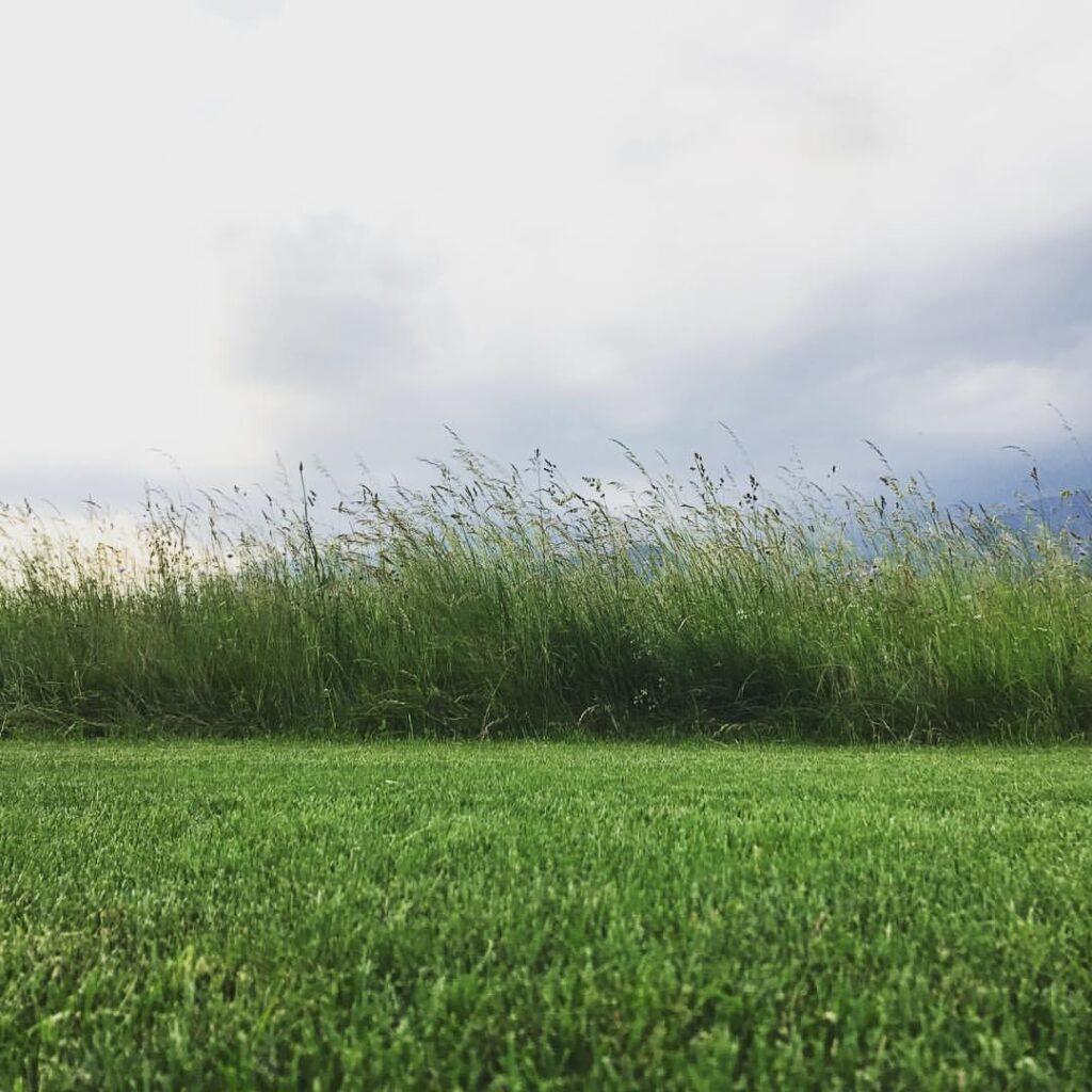 Če trava zraste višje od 10 cm, je nikoli ne pokosimo naenkrat.